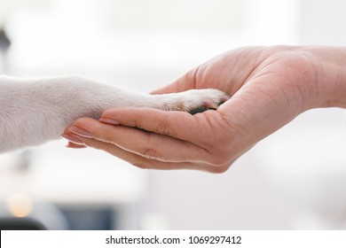 Friendly woman holding dogs legs in hands. Veterinary clinic concept. Services of a doctor for animals, health and treatment of pets