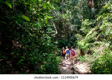 Friends are walking in the forest, Penang National Park, Penang, Malaysia