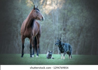 Friendship between different animals. A cat, a horse and a dog.