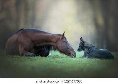 Friendship between a dog and a horse.