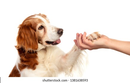 Friendship between a dog and its owner isolated on a white background