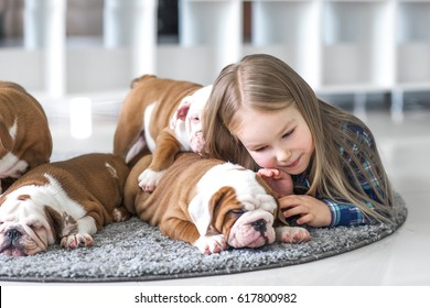 The friendship between a little girl and cute puppies of bulldog