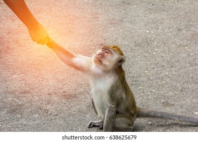 Friendship between man and monkey