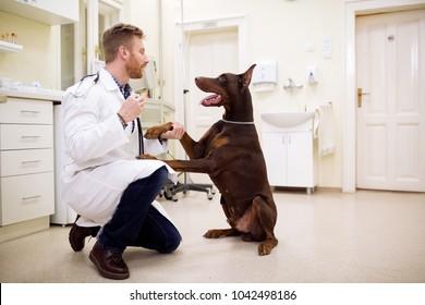 Friendship between veterinarian and big dog at examining