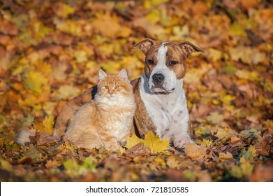 Friendship of cat and dog in autumn