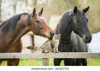 Friendship of cat and horses