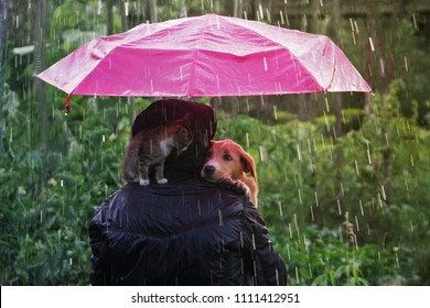 Friendship of a human with a cat and a dog. A kitten and a puppy are sitting hiding from the rain under an umbrella. Man shelters from heavy rain with his cat and dog
