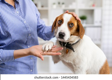 Frightened dog in the office of the veterinary clinic. The owner petting the dog. Close up. Soft focus.