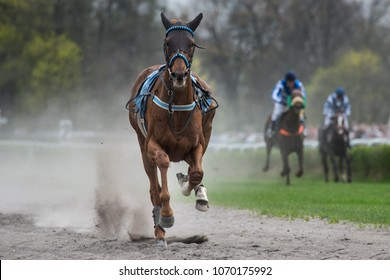 Frightened horse without jockey during horseracing.