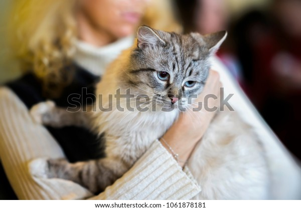 Frightened light fluffy cat in hands of girl volunteer, in shelter for homeless animals. Kitten will have a house, girl takes cat to her home