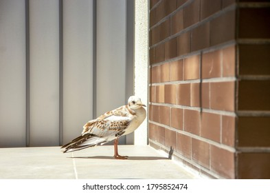Frightened seagull is sitting on the balcony.