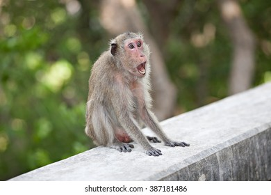 Frightening/Roaring Monkey on the wall