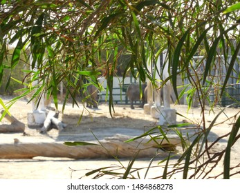Friguia Park, Bouficha city, Tunisia - July 16, 2019: Blurred background with elephants through a branch with leaves at the zoo in Tunisia.