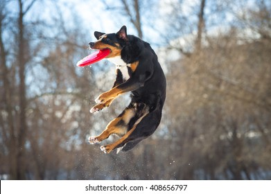 Frisbee dog with red flying disk