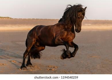 Frisian Horse Dancing