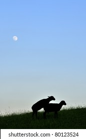Frisky sheep silhouette under full moon, family farm, Webster County, West Virginia, USA