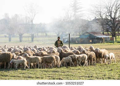 Friuli region, Italy. March 22, 2018. a shepherd with a flock of sheep in the countryside in winter