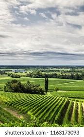 Friuli wineyards landscape