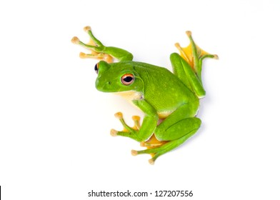 frog,