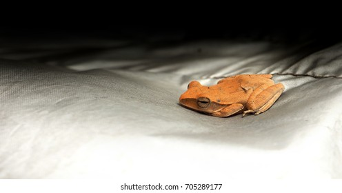 Frog baby orange color, The chin was over his hand, He is on silver cloth, Macro photo and close up focus select at face has copy space, Find in my house Thailand Asia.