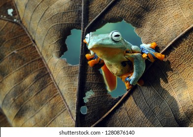 the frog is in between the leaves