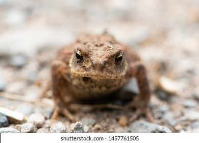 Frog close up in natural environment.