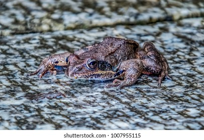 Frog closeup image