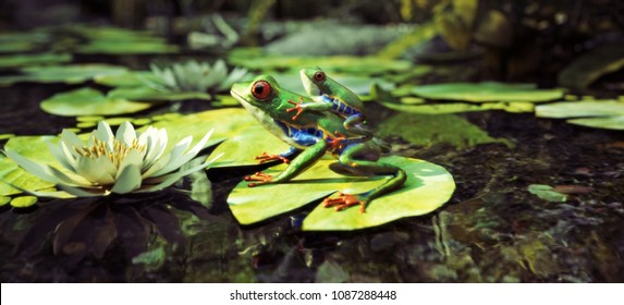 Frog family sitting on a lily pad with baby on back. Leadership, protection,security , family concept. 3d rendering