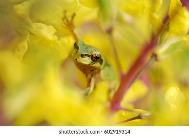 Frog in Flowers