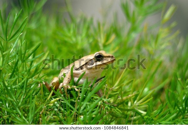 Frog with green background