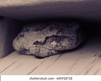 Frog hiding between two pieces of wood