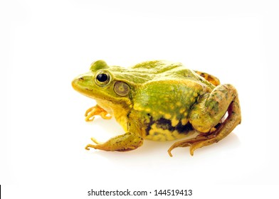 Frog isolated on a white background, and close-up pictures