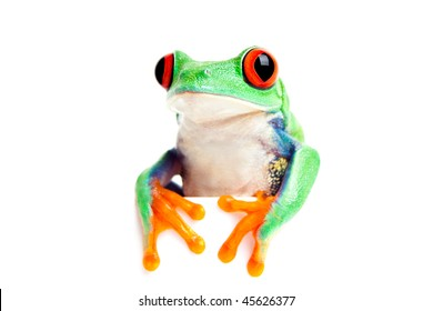 frog isolated on white - red-eyed tree frog (Agalychnis callidryas) looking over edge with feet in front. Great for banners, cards, etc.