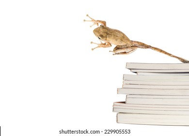 a frog is jumping over stack of book