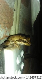 The frog life This is my photo. This is shooting in my phone. I think  it is like you. The all images are in sir lanka. Please download this image like.