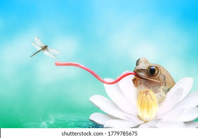 Frog with a long tongue catching dragonfly