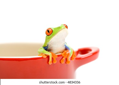 frog looking out of cooking pot for help. a red-eyed tree frog (Agalychnis callidryas), closeup isolated on white