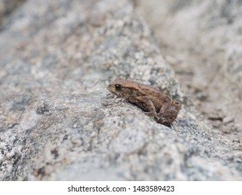 Frog luring behind a peak on small mountain, hiding from predators whilst hunting for food