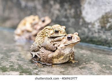 Free frog sex