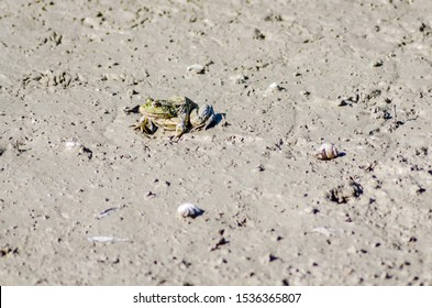 frog in its natural environment