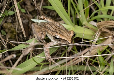 Frog in its nature