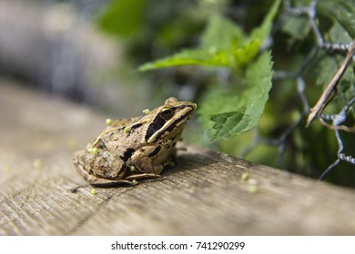 Frog on a bench in the garden