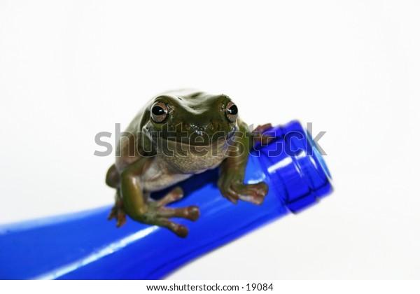 frog on bottle