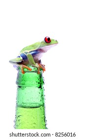 frog on a bottle - red-eyed tree frog (Agalychnis callidryas) on a wet bottle isolated on white