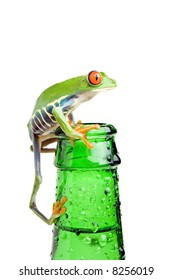frog on a bottle with water, a red-eyed tree frog (Agalychnis callidryas) closeup isolated on white