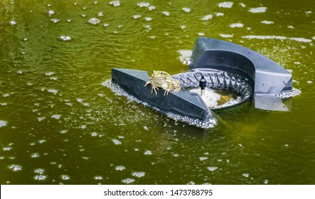 Frog on the floating skimmer filtering water on surface of water in natural swimming pond. Pond aerator and skimmer purifying water without chemicals