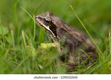 Frog on a grass in a garden. Shallow depth of field. Selective focus.