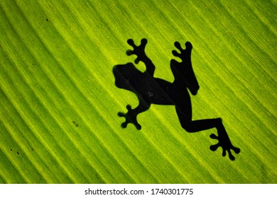 frog on the leaf with silhouette
