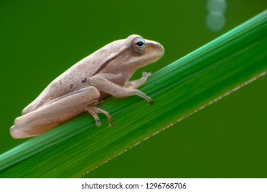 frog on the leaves