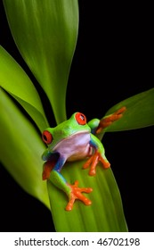 frog on plant leaves isolated black